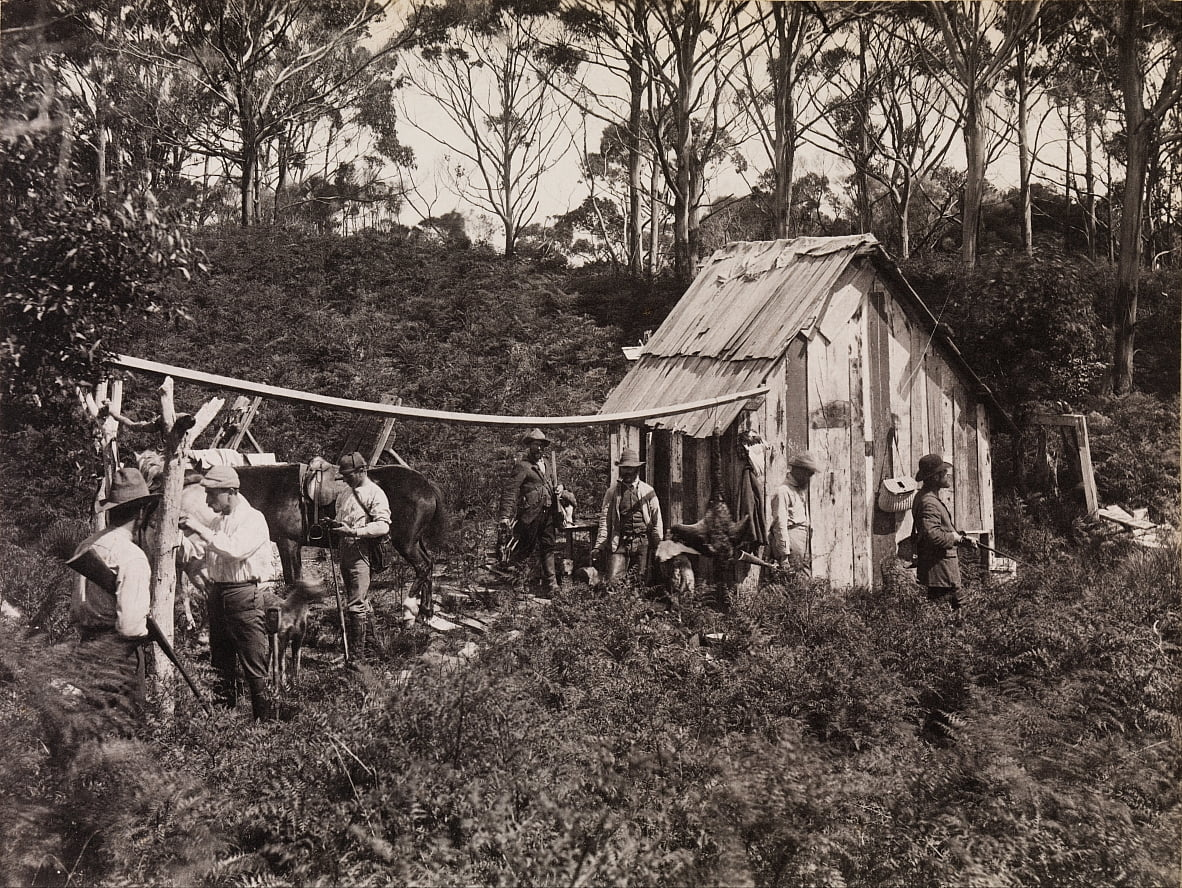 Berties Hut, Feld-Naturalisten-Club-Expedition nach King Island von Archibald James Campbell