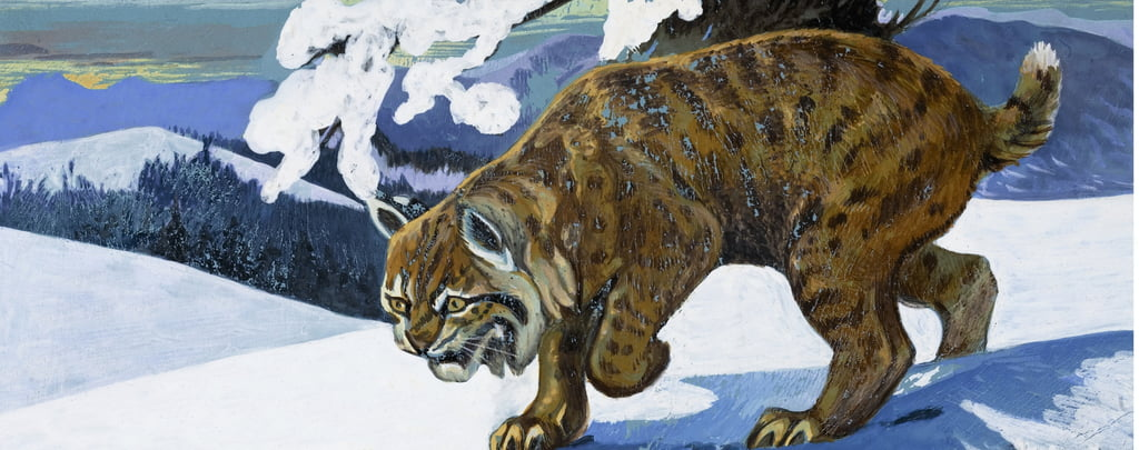 Bobcat von English School