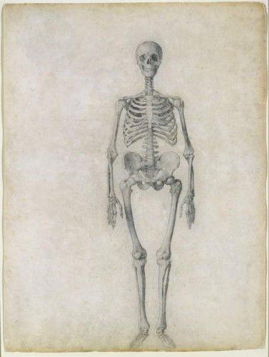 Das menschliche Skelett, vordere Ansicht, aus der Reihe Eine ...