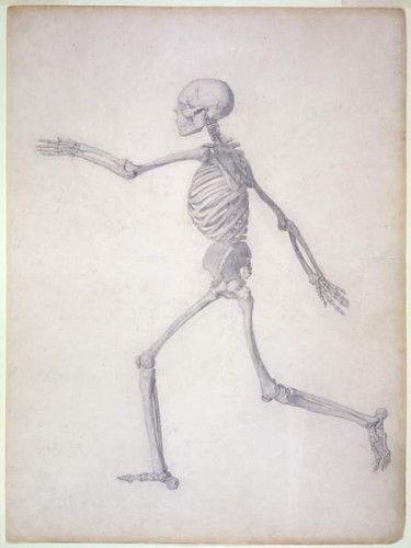 Das menschliche Skelett, Seitenansicht, aus der Serie Eine ...