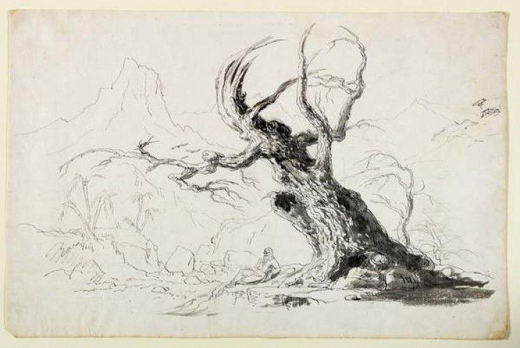 Großer Knorriger Baum Mit Sitzendem Bärtigem Mann Feder Und Tinte